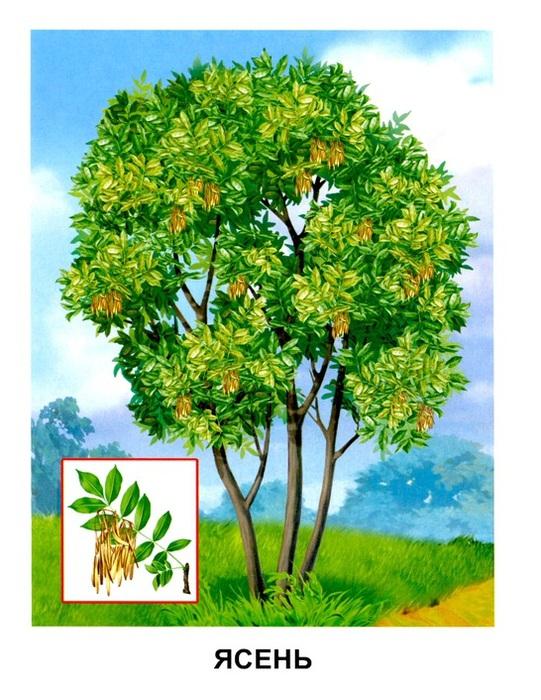 Деревья1 (541x700, 157Kb)