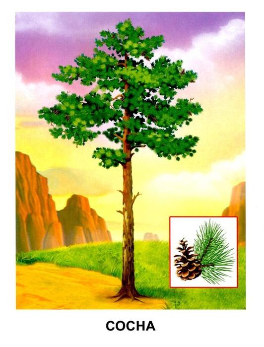 Деревья7 (532x700, 116Kb)