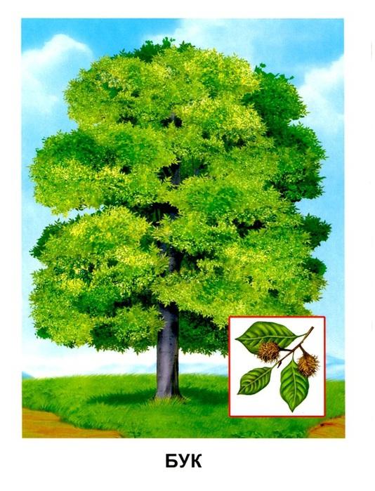 Деревья10 (534x700, 158Kb)