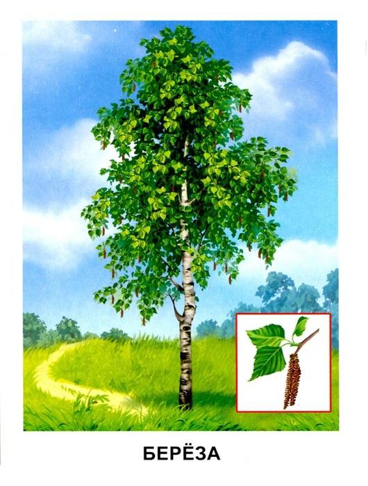 Деревья12 (530x700, 138Kb)