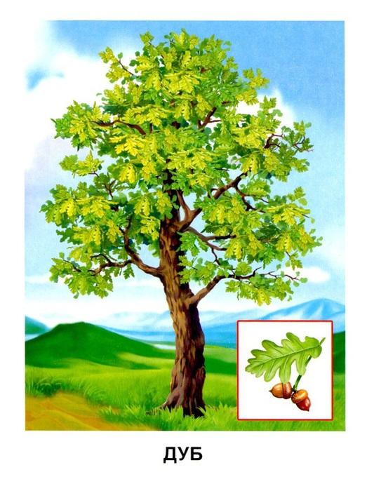 скачать картинку дерево с яблоками