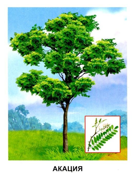 Деревья16 (533x700, 140Kb)