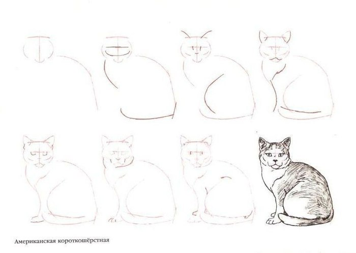 Рисуем кошку поэтапно.