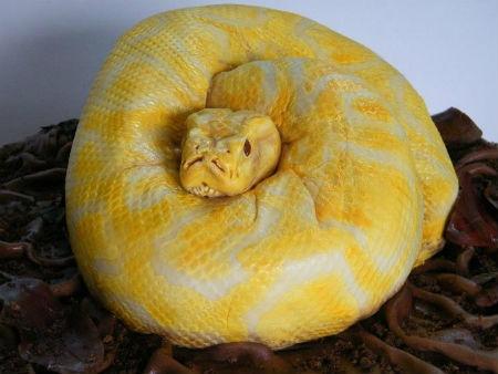 Опасная змея  торт (450x338, 49Kb)