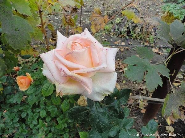 Осенние_цветы_2 (600x450, 171Kb)