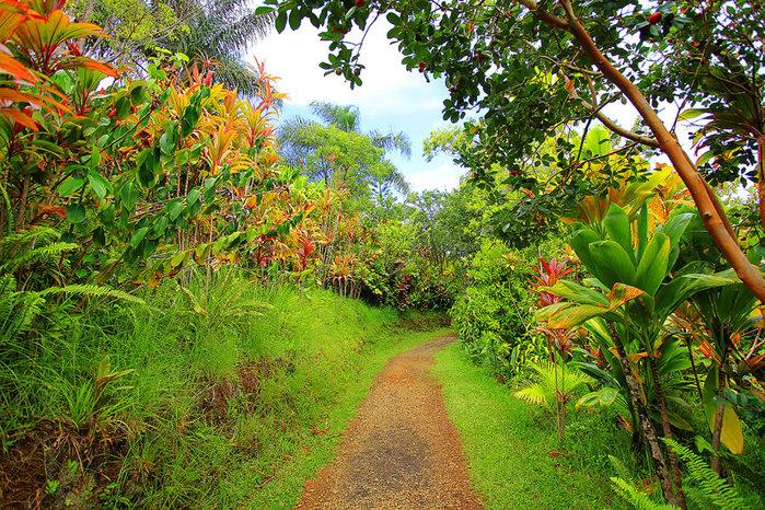 сады острова мауи фото 2 (700x466, 242Kb)