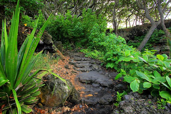 сады острова мауи фото 6 (700x466, 665Kb)