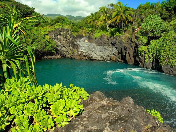 сады острова мауи фото 8 (700x525, 223Kb)