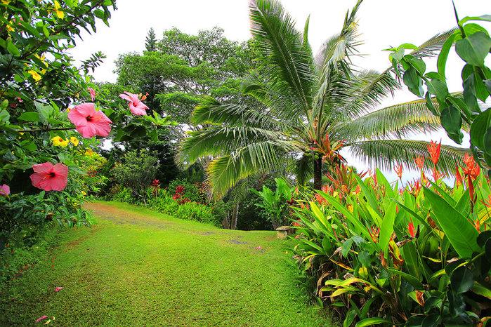сады острова мауи фото 10 (700x466, 204Kb)