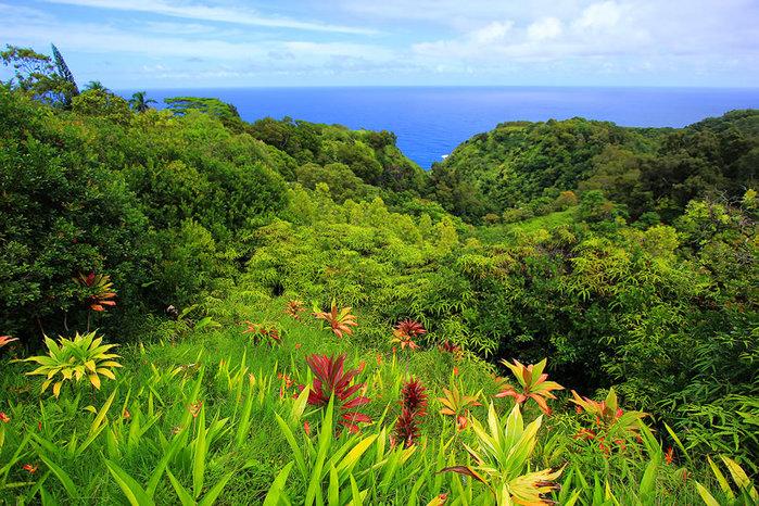 сады острова мауи фото 12 (700x466, 181Kb)