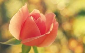 аватарка розаа краснаяjpg (290x181, 35Kb)