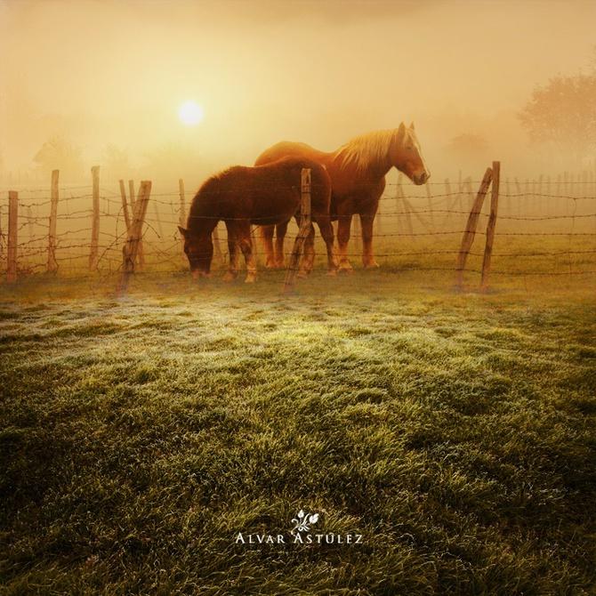 лошади фото (670x670, 209Kb)