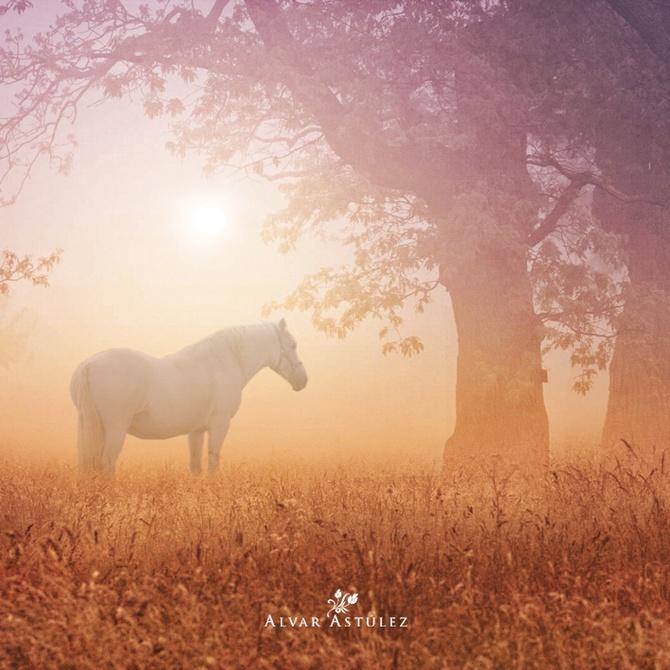 лошади фото 1 (670x670, 151Kb)