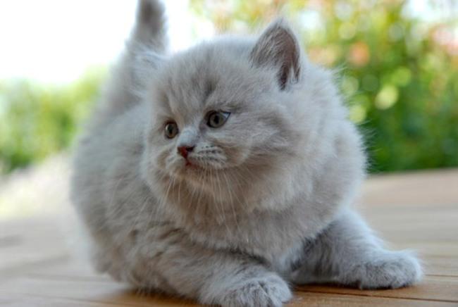 кошка. (650x436, 47Kb)