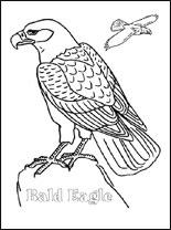 bald-eagle-s (155x208, 10Kb)