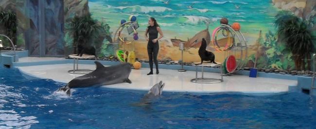 дельфины лезут на сцену хотя номер не их (650x266, 122Kb)