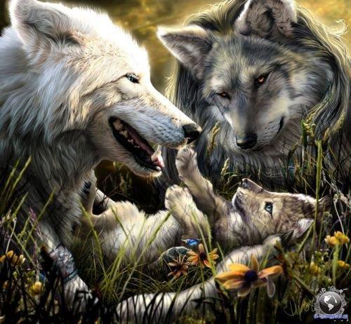 волк1 (500x462, 65Kb)