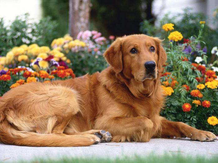 способности собак/3185107_interesnoe_o_sobakah (700x525, 128Kb)