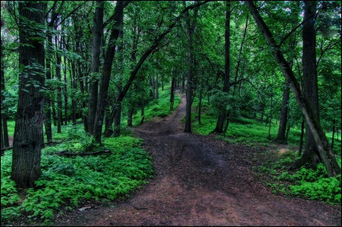 Дорога к Кунцевскому городищу/3673959_5_2_ (700x464, 209Kb)