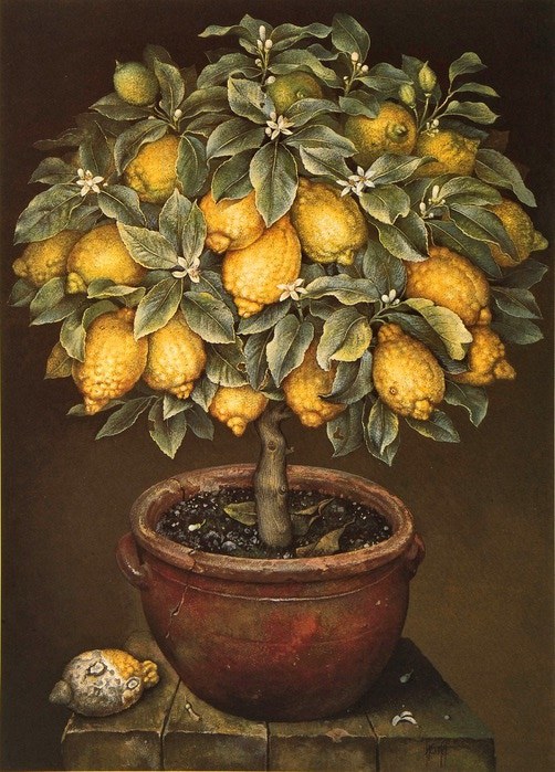 LEMON TREE IN BLOSSOM IN TERRACOTTA POT 86x61cmsGouache1989 (502x700, 295Kb) .