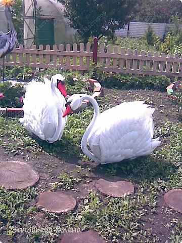 Лебедь на участке своими руками 27