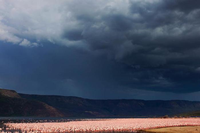 thumb_Nakuru_-_ozero_rozovyih_flamingo_21 (700x466, 27Kb)