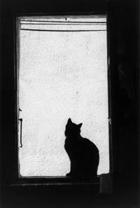 Cats_and_window_05_Koteiko (200x297, 6Kb)