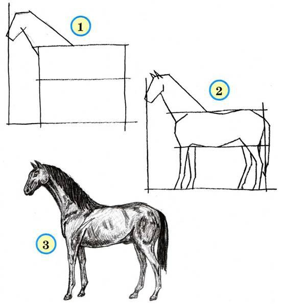 рисунок лошади.