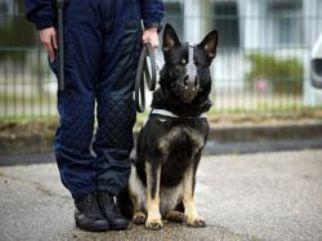 Бравый бразильский пёс-полицейский (322x241, 15Kb)