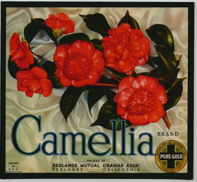 Ccamellia (400x369, 29Kb)