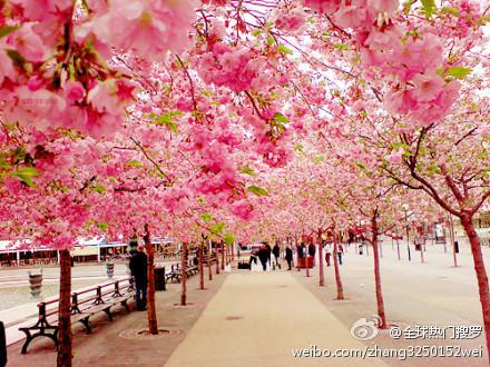 розовый сад (440x330, 121Kb)