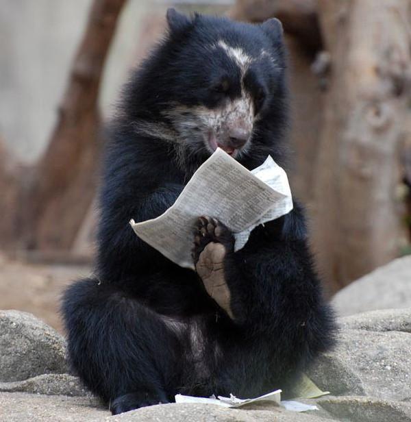 медведь_Утренняя газетка ... (600x616, 78Kb)