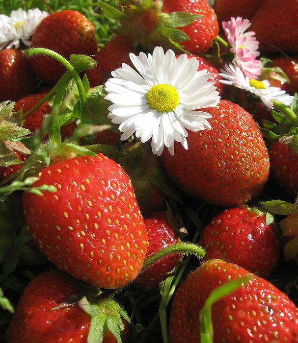 ягоды4 (607x700, 188Kb)