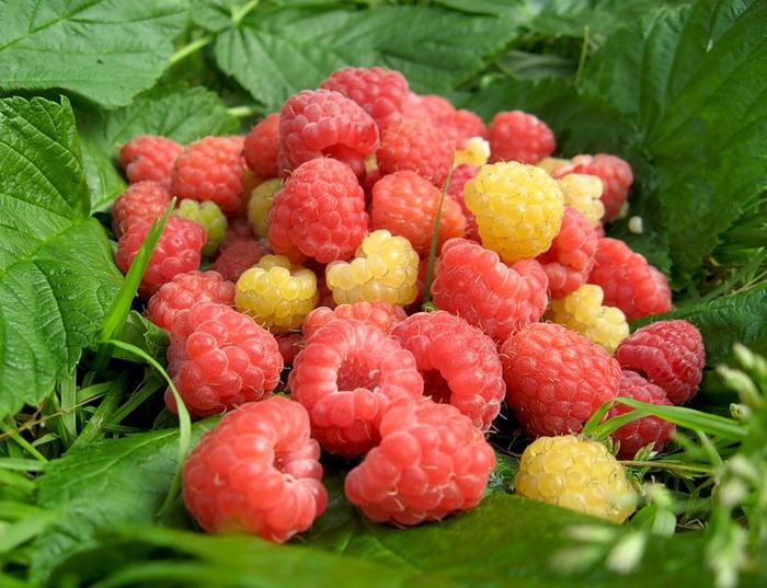 ягоды1 (700x537, 118Kb)