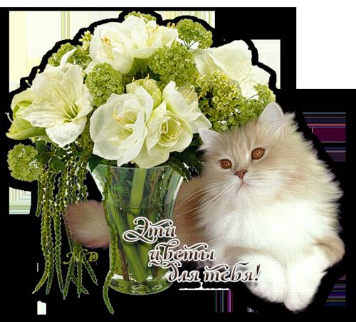 котик с розами (500x452, 411Kb)