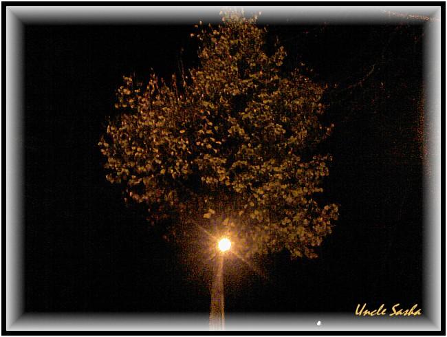 foto-0074.10.12.3 (650x490, 91Kb)