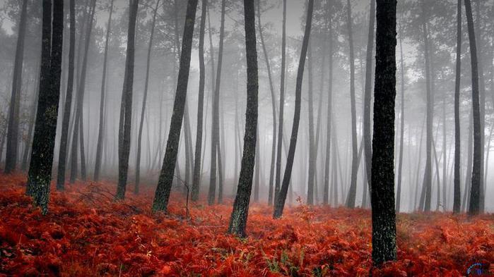 туман в н (700x393, 52Kb)