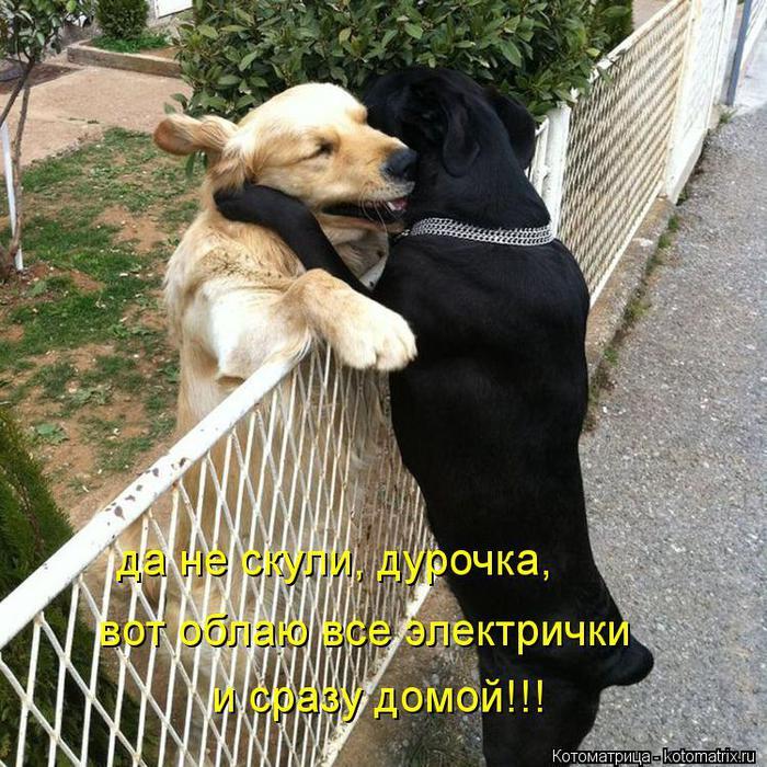 kotomatritsa_3Wm (700x700, 114Kb)