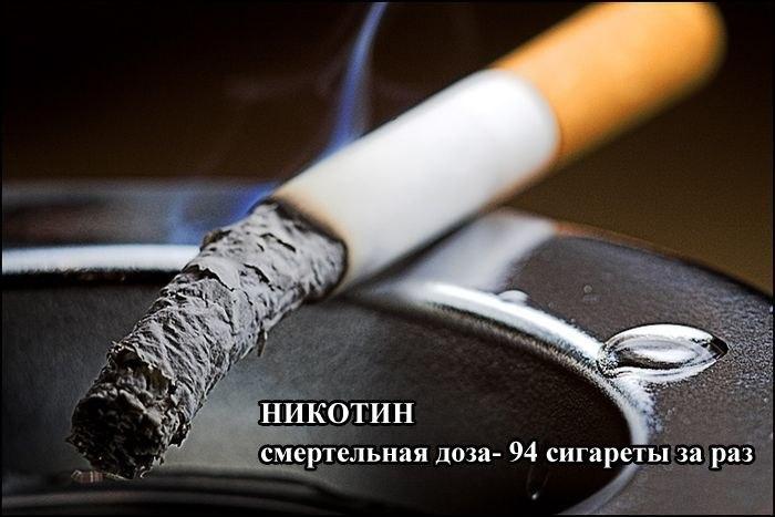 4039185_7afad61e7e13 (700x467, 55Kb)