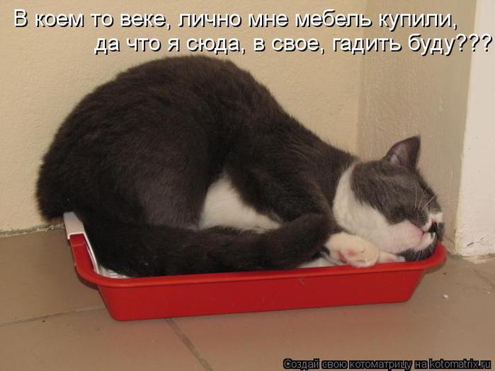 Как сделать так чтобы котенок не боялся хозяина
