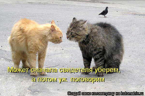 kotomatritsa_lZ (600x397, 57Kb)