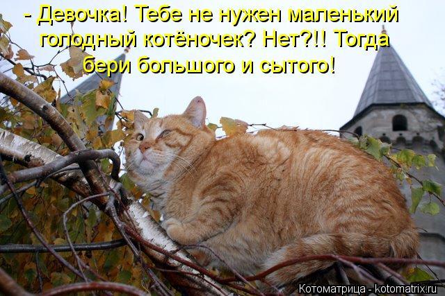 kotomatritsa_NM (640x427, 68Kb)