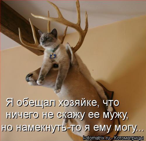 kotomatritsa_q (500x482, 35Kb)