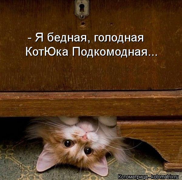 kotomatritsa_x6 (600x595, 63Kb)