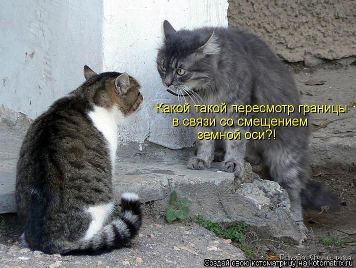 kotomatritsa_ZX (700x525, 76Kb)