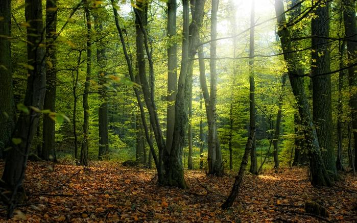 Осень фото пейзажей высокого - 00