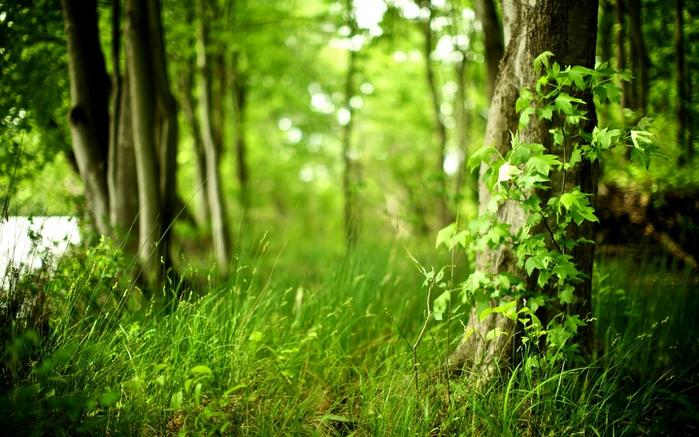 Осень фото пейзажей высокого - fad2