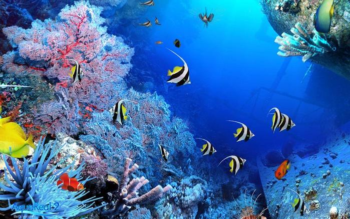 Подводный мир очень красив и