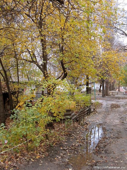осень в Воронеже, 1 (525x700, 472Kb)