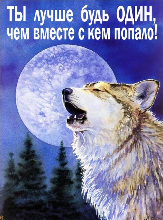 Скачать картинки волков с надписями 3